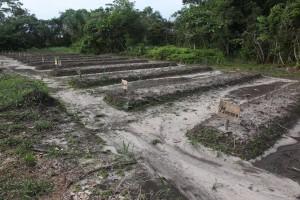 new master plant garden at Ricardo's